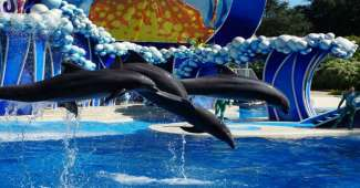 SeaWorld in Orlando