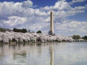The Needle Washington