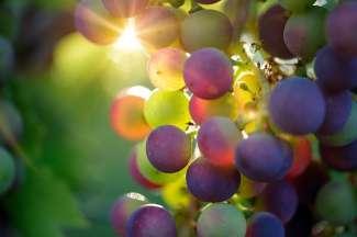 Een vallei met wijngaarden.