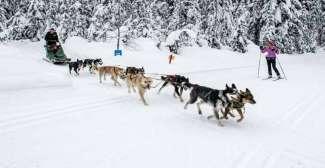 Hondensleetochten in de winter (Tourism Kamloops - Mary Putnam)
