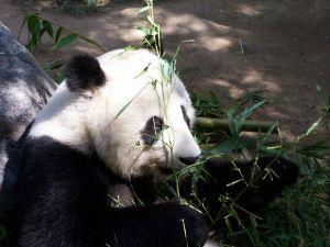 De nummer 1 dierentuin ter wereld.