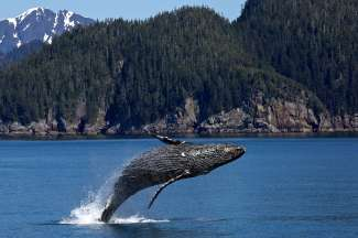 Ga whalewatchen vanuit Eureka