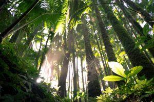 Regenwouden Hilo Hawaii
