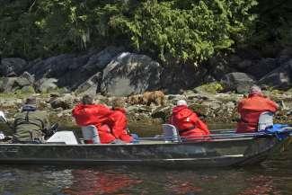 Mensen op een boot zijn beren aan het bekijken bij Knight Inlet