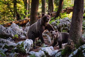 Moeder beer en haar welp