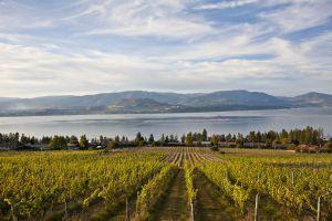 Wijngaard in Kelowna