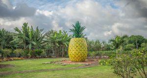 DOLE ananas plantage