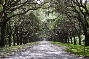 Wormsloe Plantation Savannah.