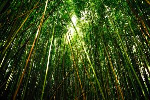 Forest Maui