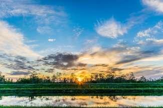 Natuur in de Everglades