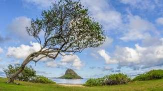 Chinaman's Hat heet eigenlijk Mokolii en ligt in de Kāneʻohe Bay op Oahu.