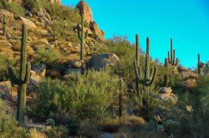 Woestijnflora