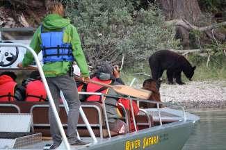 Met een boot kan je vlakbij de beren komen, maar natuurlijk wel op een veilige afstand.