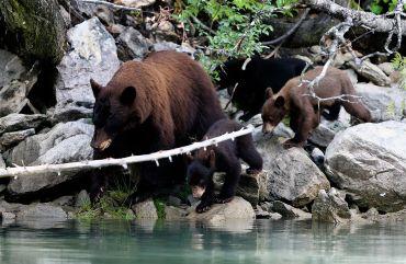 Mama beer met haar kinderen