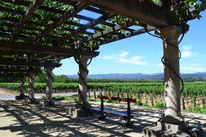De wijngaarden van Inglenook