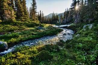Prachtig nationaal park in Washington.