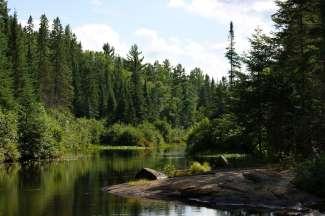 Het Algonquin Provincial Park is een prachtige omgeving voor wandel- en kanotochten waarbij de kans groot is dat u een Eland tegenkomt.