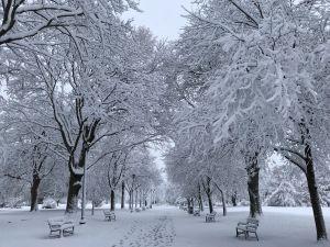 Winter in Washington Park