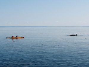 Geliefde plek voor walvissen