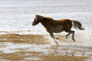 Wilde paarden op Cumberland  Island