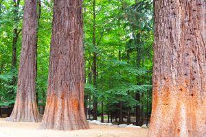 Sequoia & Kings Canyon