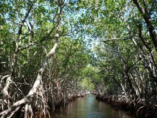 Everglades National Park heeft vele indrukwekkende Mangroves waar u doorheen kunt varen.