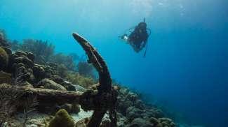Geniet tijdens het duiken van de prachtige onderwaterwereld.