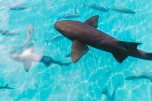Onderwaterwereld Exuma