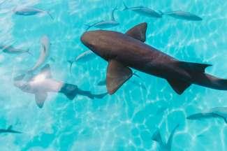 In het water rond Exuma ziet u mooie vissen en haaien voorbij komen.