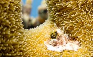 Bonaire National Marine Park ligt rond de hele kust van Bonaire en beschermt daardoor het koraalrif en de vele vissen en schildpadden die hier wonen.