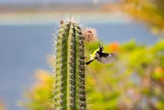 De vogel bananaquit komt veel voor op Bonaire.  Er zijn wel meer dan 500 soorten vogels te vinden alleen op dit eiland.