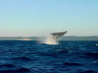 Vanaf Reykjavik kunt u een onvergetelijke Whalewatching tour boeken.