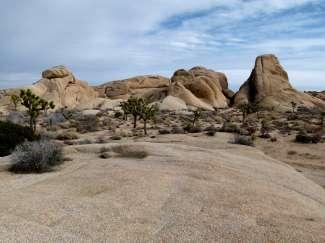 Joshua Tree National Park ligt in de Mojave Desert en staat vol met de gelijknamige Yucca planten.