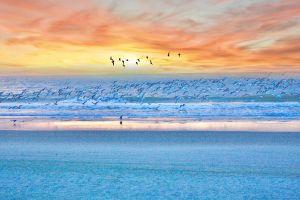 Vogelspotten op het strand.