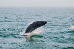 Whalewatching Bar Harbor