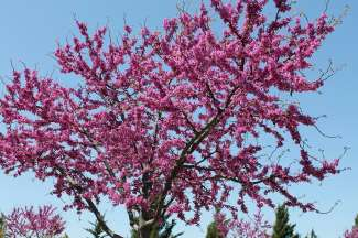 Een van de vele bomen in de prachtige parken