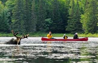 Entdecken Sie die Naturwunder vom Moose Valley Provincial Park.