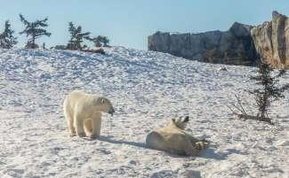 Je vindt hier niet alleen vertegenwoordigers van het noorden, maar ontdekt ook veel dieren van over de hele wereld.
