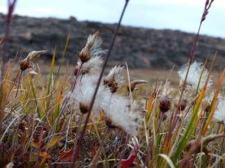 Ook in de ruige toendra zijn er zomermomenten en natuur te ontdekken.