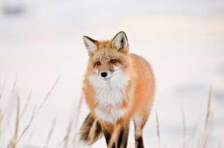 Hobby- en professionele fotografen komen aan hun trekken in Churchill. Let altijd op dieren in het wild.