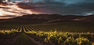 Wijngaarden in Santa Maria