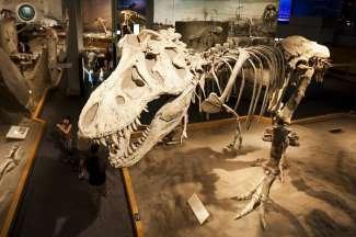 Een bezoek aan het museum mag u zeker niet missen!