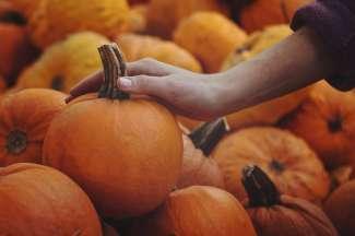 De traditionele boerenmarkt vindt 2 x per week plaats