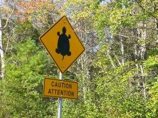Er is hier een waarschuwing voor schildpadden.