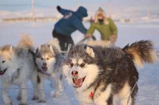 Ga op hondensledetocht in en rond Iqaluit.