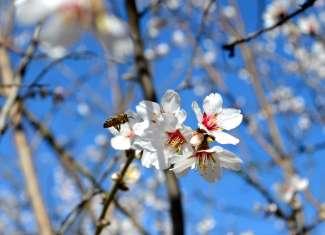 Het voorjaar in Modesto Valley