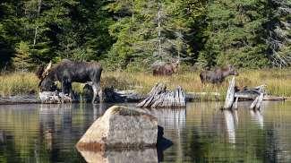 Bekijk de zeldzame wilde dieren in alle rust.