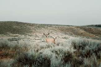 Wild spotten in Rock Springs