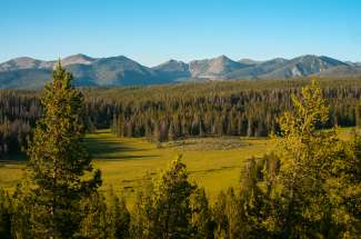 Groene natuur in Montana