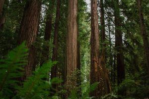 Redwood National Park & State Parks